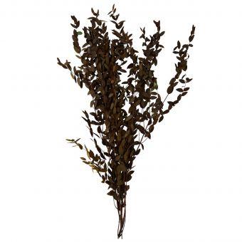 Madam Stoltz Eukalyptus grün